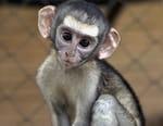 Le refuge des singes