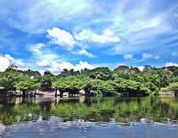 Les mondes inondés : Pacaya Samiria, la jungle des miroirs