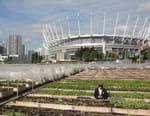 Une révolution agricole urbaine
