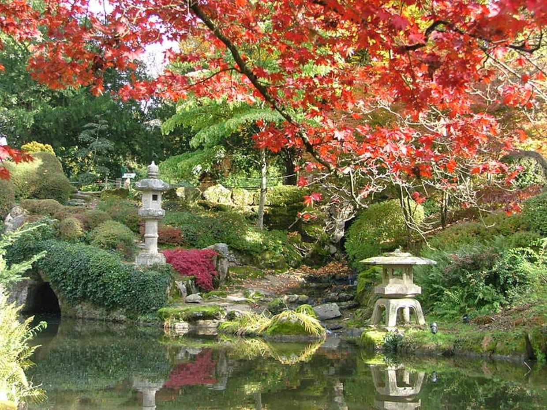 S 39 vader dans le parc oriental de maul vrier for Jardin japonais cholet