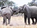 L'Afrique à l'état sauvage