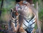 La vengeance des tigresses