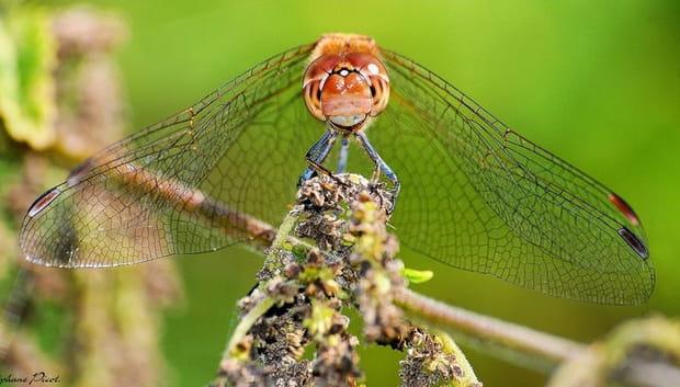 25 portraits originaux d'insectes