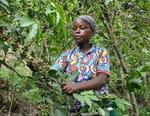 Rwanda, une renaissance