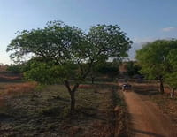 Sur la piste des senteurs : Madagascar, fragrances baobab