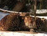 Quatre saisons au zoo de Montréal