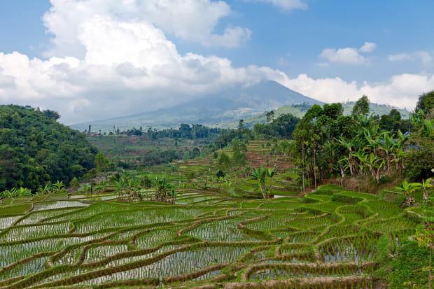 Les rizières en terrasses de Bali