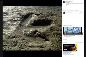 Une Australienne tombe par hasard sur une empreinte de dinosaure vieille de 130millionsd'années