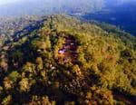 Papouasie-Nouvelle-Guinée : Jim & Jean au secours du kangourou arboricole