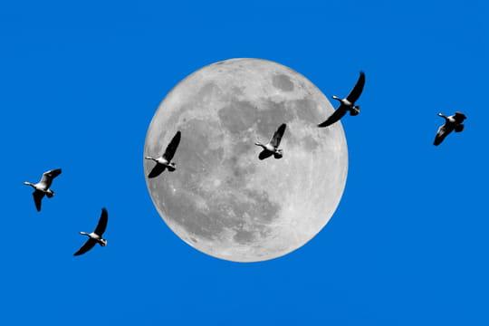 Super Lune des Fleurs: à quelle heure observer la dernière Super Lune de l'année?