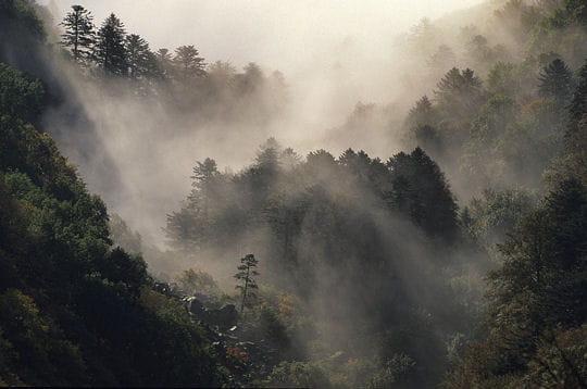 Forêt d'éboulis et brume dansante