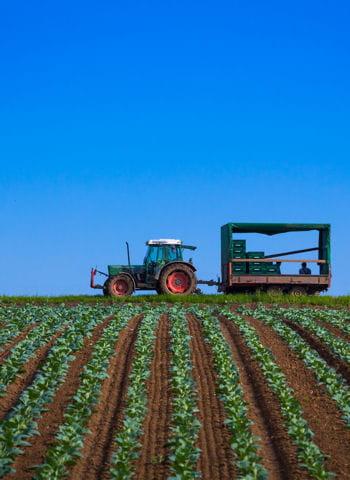 pesticides pas d agriculture bio sans chimie. Black Bedroom Furniture Sets. Home Design Ideas