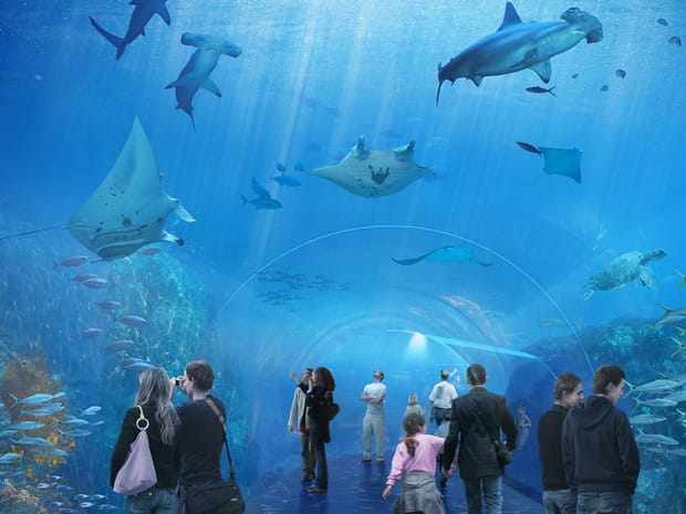 Nausicaá, le plus grand aquarium d'Europe en images