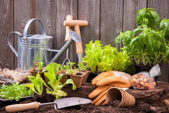 Comment redonner vie à son jardin et son potager après l'été ?