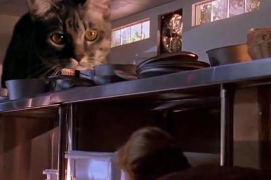 """""""Jurassic Cat"""": quand les dinosaures sont remplacés... par des chats"""