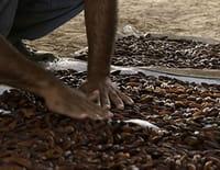 Tous les parfums du monde : La fève tonka du Venezuela