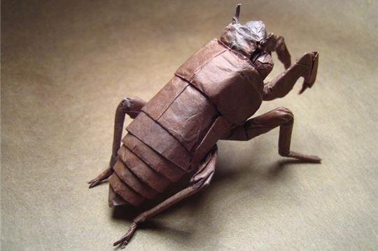 Insecte debout