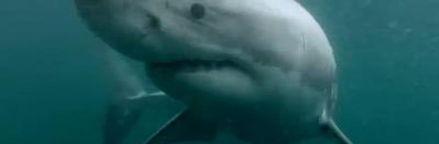 Un Australien se fait attaquer par un requin : vraie vidéo ou canular ?
