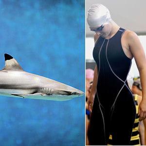 la peau du requin permet à l'animal d'atténuer l'effet de résistance à l'eau.