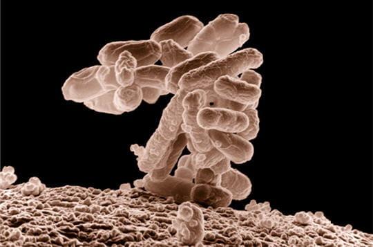 Attaque bactérienne