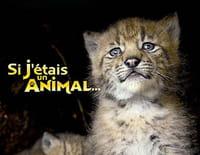 Si j'étais un animal : Le blaireau