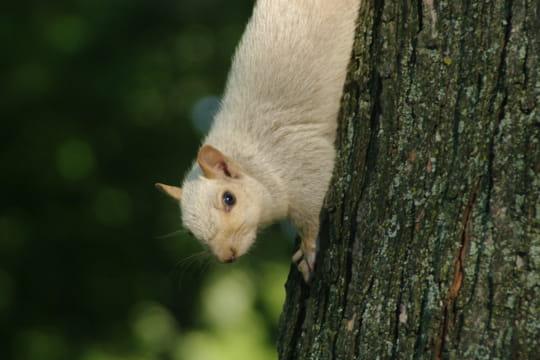 Un écureuil