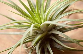 """Des plantes d'intérieur """"increvables"""" etfaciles à cultiver"""