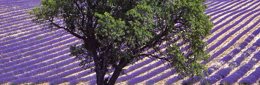 Les paysages champêtres de France