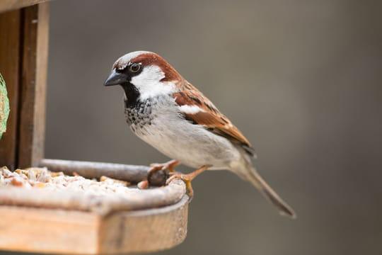 Mangeoire à oiseaux: comment bien la choisir