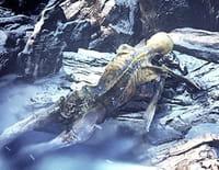 Mystérieuses momies : Ötzi, l'homme des glaces