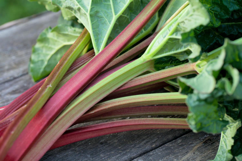 Purin de rhubarbe: le fabriquer et l'utiliser au mieux