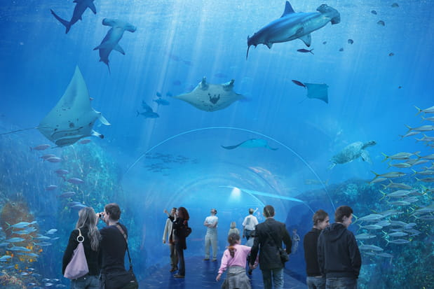 Nausicaa, le plus grand aquarium d'Europe