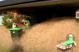 """Australie : la ville de Wangaratta envahie par les """"tumbleweeds"""""""