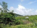 Guyane, terre de tous les possibles