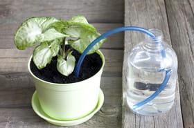 Des astuces pour l'arrosage des plantes pendant les vacances