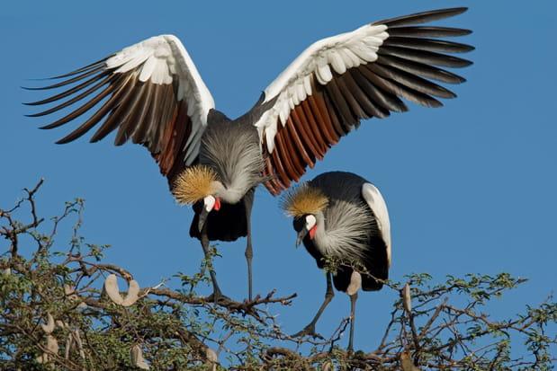Le parc national Hwange au Zimbabwe
