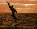 Le royaume des dauphins