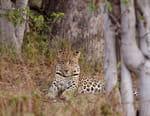 Journal d'un jeune léopard