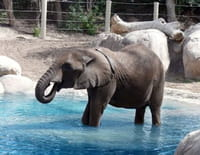 Animaux stars du zoo : Le zoo de la Flèche