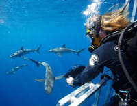 Shark Men : Marquage de requins