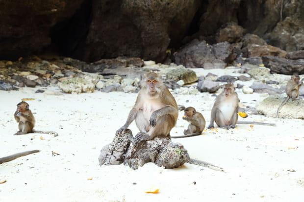 Monkey Beach en Thaïlande