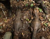 La grotte des crocos