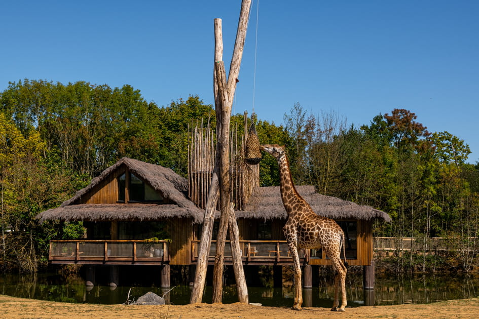 Un safari au Kenya en Loire-Atlantique