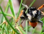 La vie secrète des araignées
