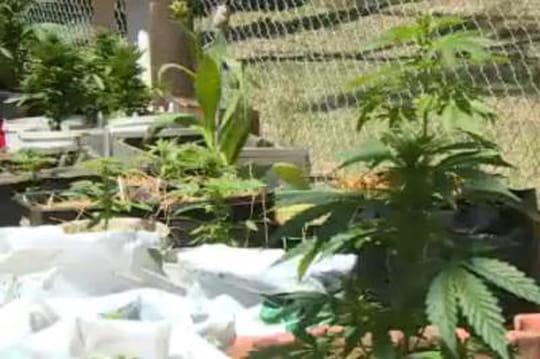 Combien ça pourrait rapporter à l'Etat de légaliser le cannabis?
