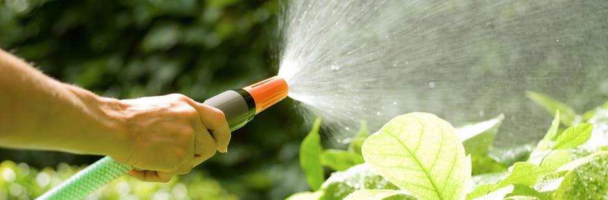 Comment protéger son jardin des fortes chaleurs?