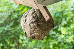 detruire un nid de guepes dans les combles id es. Black Bedroom Furniture Sets. Home Design Ideas