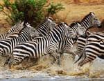 Migration sauvage