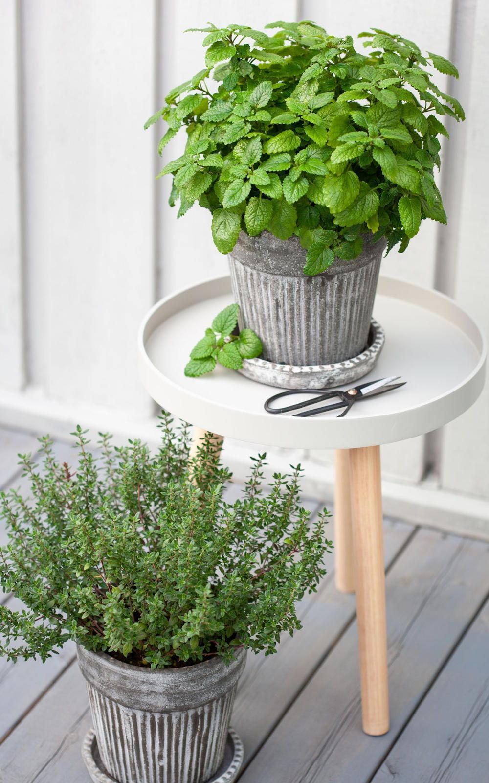 Plantes Aromatiques En Jardinière comment cultiver ses aromates en pot ?