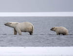Alaska, survie avec les ours